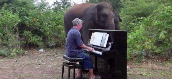 Un éléphant aveugle se met à danser dès qu'il entend le son du piano joué par le pianiste