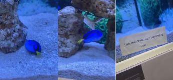 Voici un poisson qui a un bon sens de l'humour