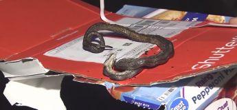 Un serpent cuisait avec la pizza