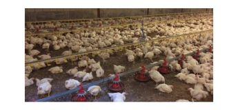 Inside KFC : au coeur d'un géant du fast-food du poulet