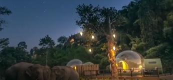 Découvrez les suites bulles au cœur de la jungle de la Thaïlande entourées par des éléphants