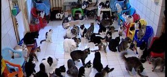Une femme vit avec 130 chats dans un petit appartement à Moscou