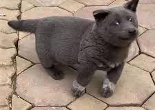 Est-ce un chien ou un chat ? Cet animal est la nouvelle coqueluche d'Internet