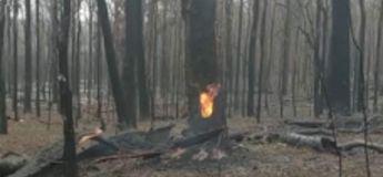 Incroyable : un arbre continue à brûler de l'intérieur bien qu'il soit complètement trempé par la pluie