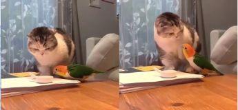 Qui aura la nourriture entre ce chat et ce perroquet ?
