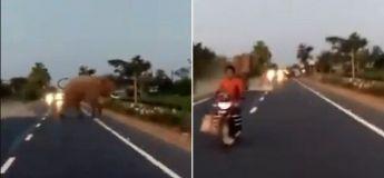 Un motard se fait presque heurter par un éléphant en traversant une route bloquée