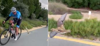 Dubai : un petit oiseau se joint à des randonneurs à vélo