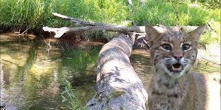 Cette vidéo d'un tronc d'arbre dans la forêt est simplement magnifique