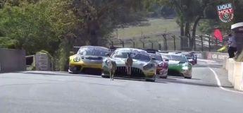 Ces deux kangourous ont interrompu la course d'endurance automobile de Bathurst, surement pour protester contre les émissions de CO2