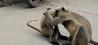 Vidéo : un singe réconforte son ami sauvé d'un poteau électrique