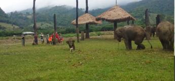 Un bébé éléphant est frustré après avoir échoué à attraper un chien