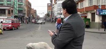 En plein tournage, ce journaliste a été poursuivi par deux chiens et n'a pu s'empêcher de rigoler !