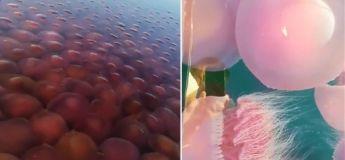 La nature reprend ses droits pendant le confinement : Des méduses pullulent dans une eau douce