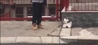 Cet homme sort son «pseudo chien» pour profiter un peu de l'air frais