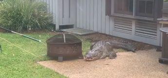 Un énorme alligator en colère saccage l'arrière-cour de la famille