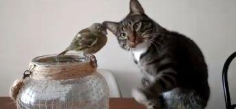 Un chaton adorable touche un oiseau comme si c'était son meilleur ami, alors qu'ils devraient être normalement des ennemis