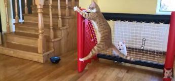Ce chat gardien de but est prêt pour une partie de foot, la meilleure vidéo de foot du confinement