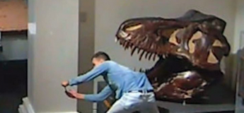 Un homme entre par effraction dans un musée et prend des selfies devant la tête d'un dinosaure