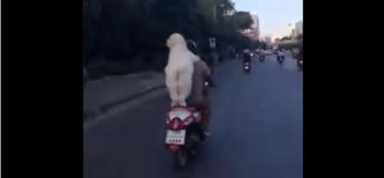 Ce chien sait différencier un feu rouge et un feu vert sur la route et le voir à l'arrière de cette moto le rend trop chou