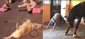Cette vidéo nous redonne le sourire avec nos amis les animaux qui nous imitent joyeusement