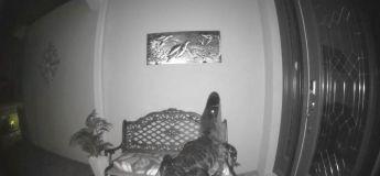 En voyant la tortue de mer accrochée sur le palier de la porte, cet alligator a cru qu'elle était réelle, et voulait l'attraper pour le manger