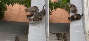 Vidéo touchante : cette chatte est venue secourir son chaton tombé du toit où ils étaient et sous le regard de leurs amis