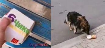 En Russie, même les chiens sont mal élevés, la preuve en vidéo !