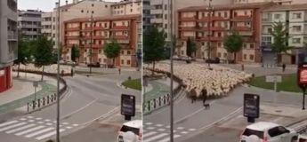 Espagne : un grand troupeau de moutons traverse les rues d'une ville devant la stupeur des internautes