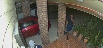 Des voleurs ont été chassés par un petit chien qui a bien défendu la maison de ses maîtres