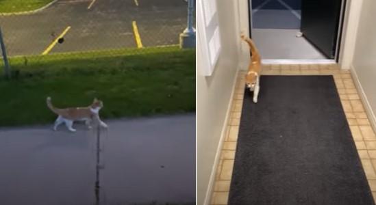 Un chat errant suit un couple et se fait adopter