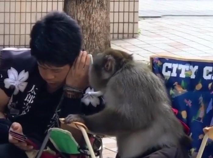 Amitié insolite, cet homme et ce singe semblent tellement complices, on se demande quel secret ils se sont partagés