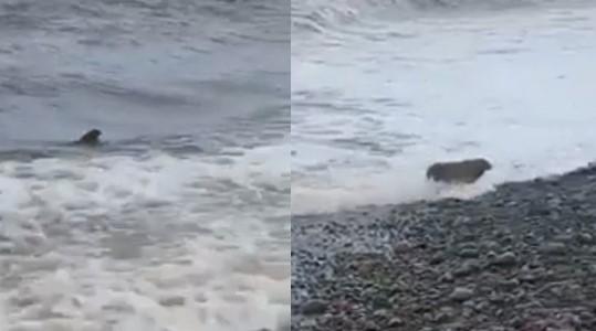 Scène insolite : un lapin surgit des eaux turbulentes de la mer au bord d'une plage