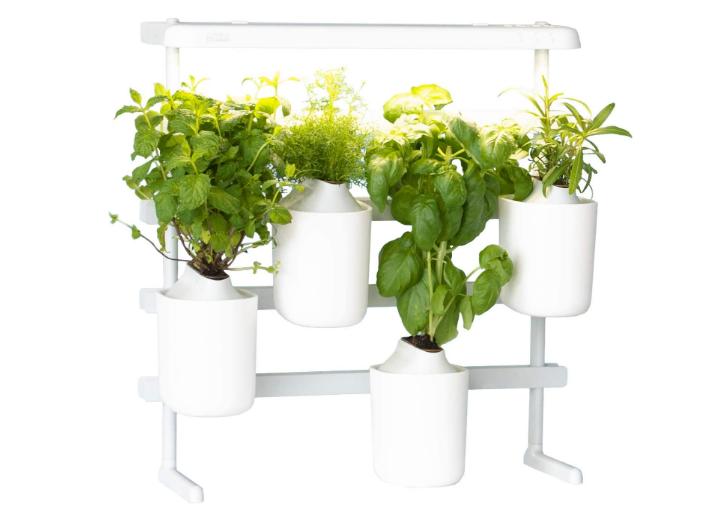 Les 5 meilleures plantes d'intérieur intelligentes faciles à entretenir