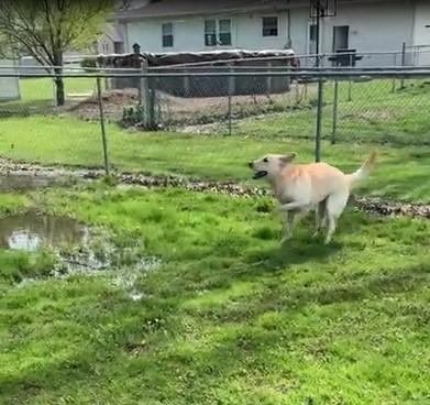 Ce chien exprime sa joie en pataugeant dans la boue