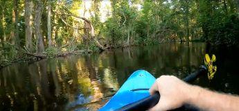La promenade en kayak de cet homme vire au cauchemar quand un alligator l'attaque soudainement