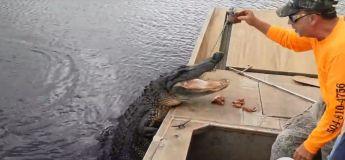 Faites connaissance avec cet alligator qui sait s'amuser avec un humain (et inversement)