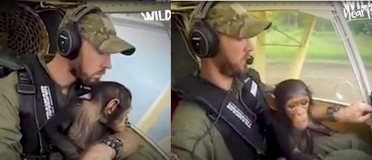 Ce pilote a pris soin d'un petit chimpanzé en l'amenant vers un centre à bord de son avion