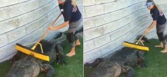 Cette femme a un métier assez spécial et qu'elle semble bien maîtriser :  Nettoyeuse d'alligator