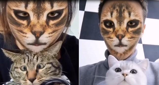Ces chats sont surpris de voir leur maitre avec des filtres chat !