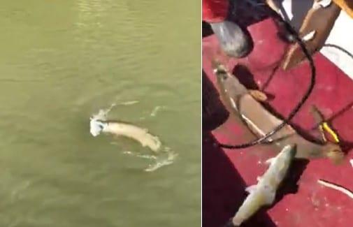Pensant ramener un petit poisson, ce jeune homme en a attrapé deux en un coup dont un énorme brochet