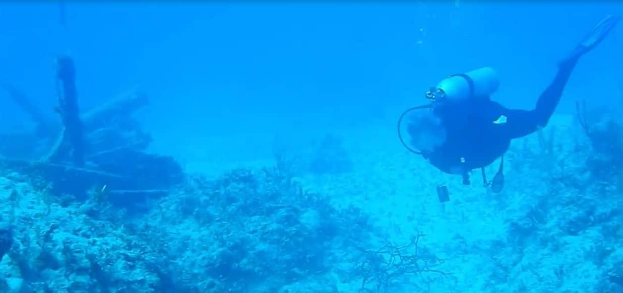 Ces plongeurs qui admiraient les fonds marins ont été perturbés par le sonar actif  très bruyant d'un sous-marin invisible