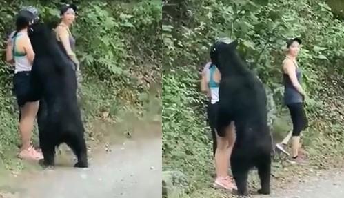 Trois jeunes femmes étaient approchées de très près par un ours