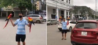 Deux perroquets lâchés en pleine ville reviennent à l'appel de leur maître