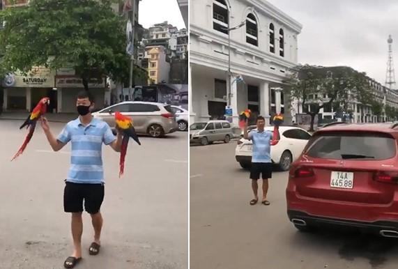 Ces deux perroquets sont lâchés en pleine ville et reviennent dès que leur maitre les appelle