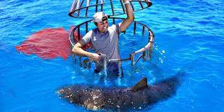 Vidéo de test d'attaques de requin en comparant le sang humain et le sang de poisson