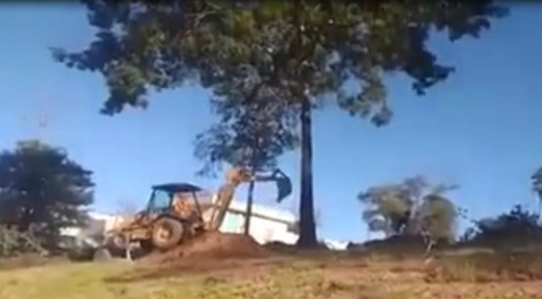 Un homme voulait abattre un arbre, mais cela s'est retourné contre lui !