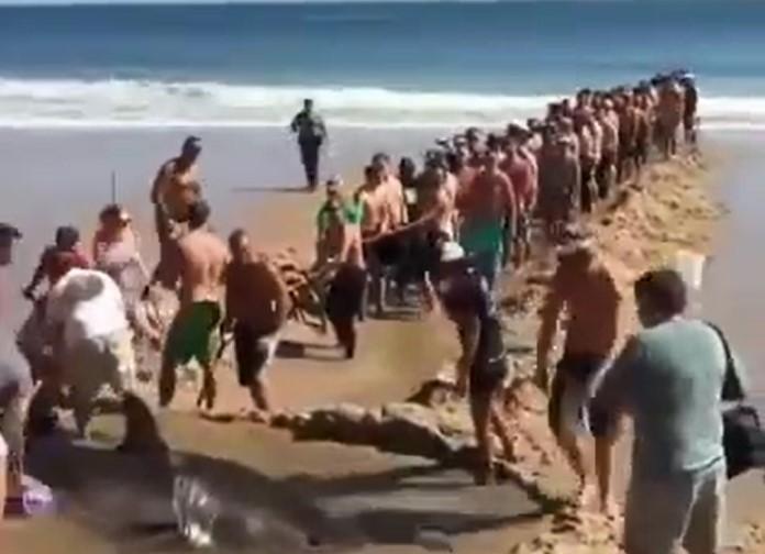 Les vacanciers sauvent un requin qui s'est retrouvé en difficulté sur la plage
