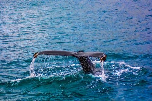 Des baleines s'approchent des observateurs qui jouent de la guitare