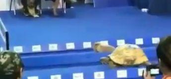 On a la preuve que la tortue bat le lièvre à la course dans cette vidéo