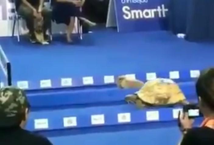 cette tortue a remporté une course contre ce lapin